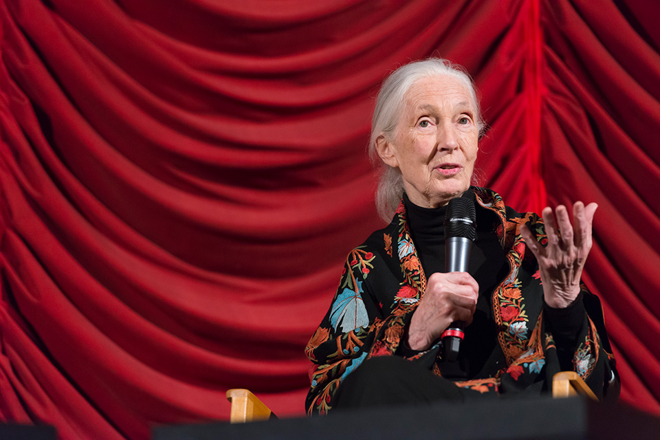 Jane Goodall, Primatologist, Anthropologist, UN Messenger of Peace